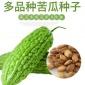 大�翠晶苦瓜�N籽�G皮�V�|�龉戏N子四季春季��_蔬菜瓜果�N孑